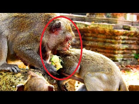 Godness! Jane bite Tazana terrifying cos made baby hurt and sad, Why maltreat baby until mum fight