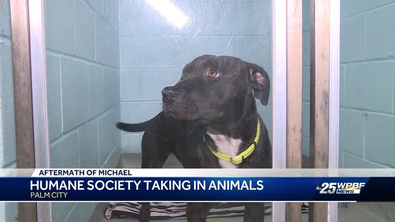 humane-society-taking-in-animals