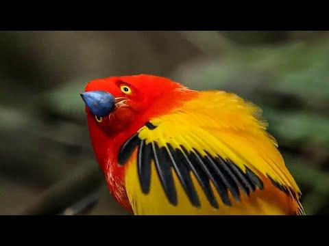 BBC Earth 50 Top Natural History Moments | 30-21
