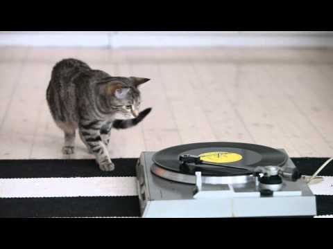 Cute cat listening to classical music