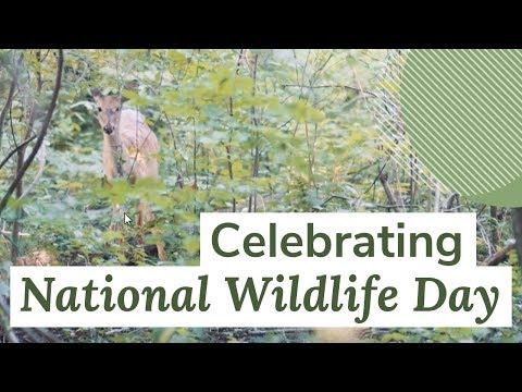 Celebrating #NationalWildlifeDay | Oneupweb Digital Marketing