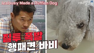 Jealousy Made a Ruffian Dog [Dogs Are Incredible]