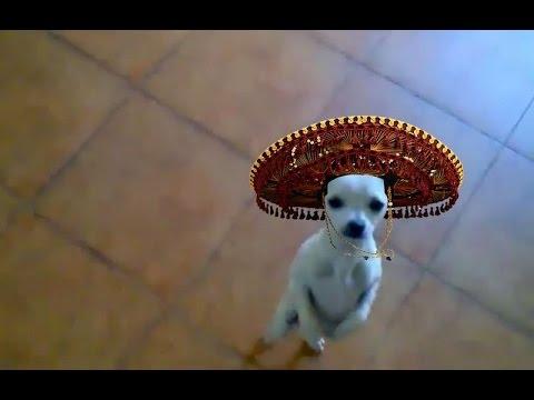 Танцующие животные, собаки танцуют / Dancing animals, dog is dancind