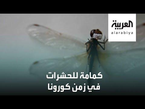 فنان روسي صنع كمامة مصغرة حجمها مليمترات خصصها للحشرات  - 14:59-2020 / 5 / 24