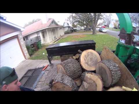 Live Oak Tree Removal