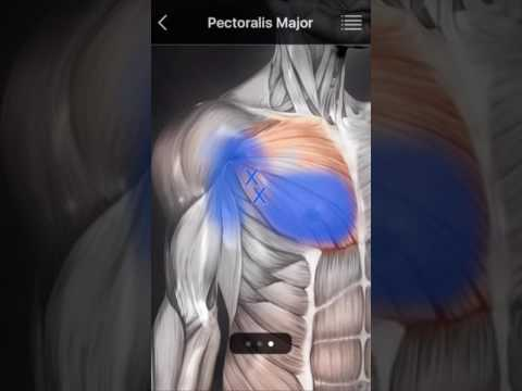 Muscle Trigger Point Anatomy – Apps on Google Play