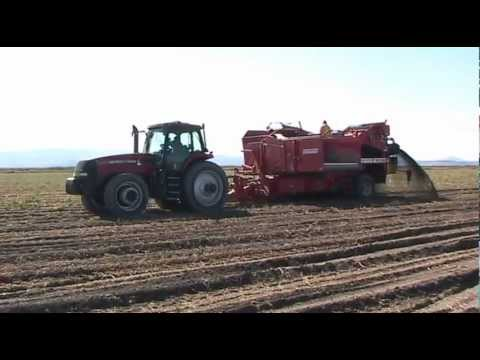 Harvesting potatoes with Klamath Basin Fresh Direct