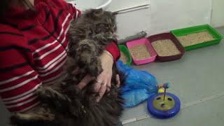 Макс на дне рождении приюта для кошек кот Матроскин видео для детей