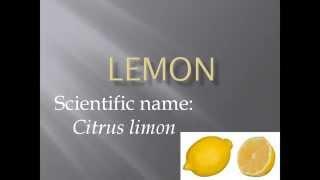 Pronunciation, Picture and Scientific name of fruit LEMON