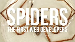 Spiders: The First Web Developers
