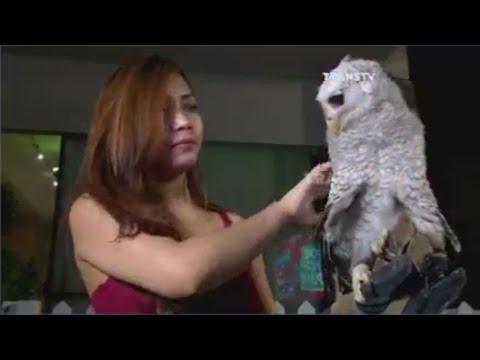 Fauna Exhibition Save Animal