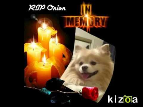 Kizoa Video Editor Movie Maker In Loving Memory Of Onion Youtube