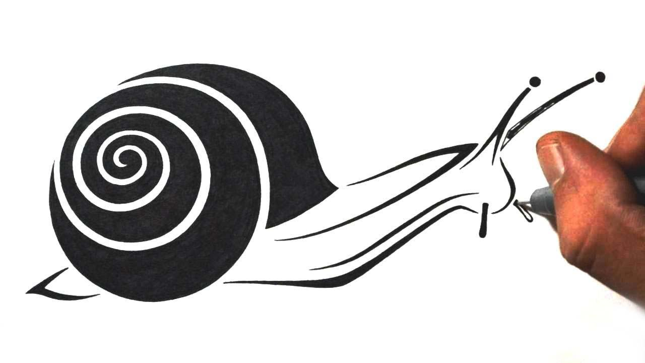 How to draw a snail tribal tattoo design style youtube for How do you draw a snail