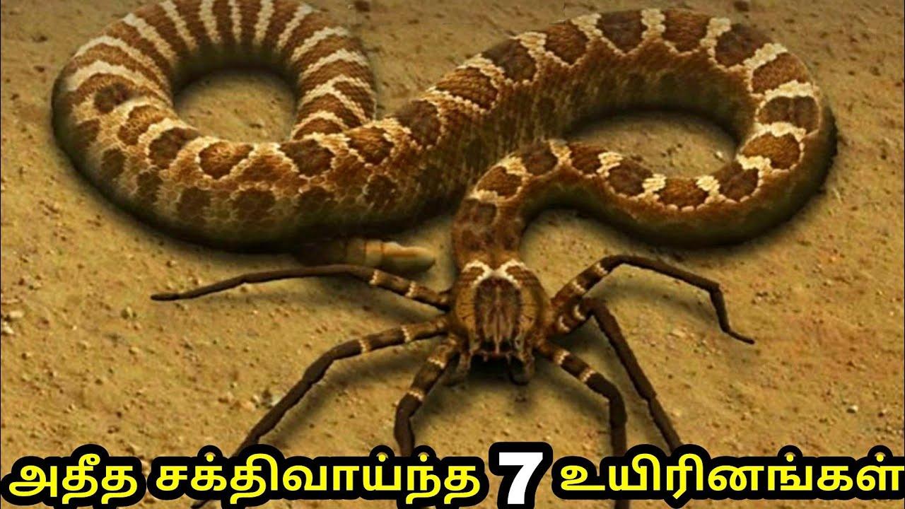 அசாத்திய சக்திவாய்ந்த 7 உயிரினங்கள் | 7 amazing animals with real superpower |
