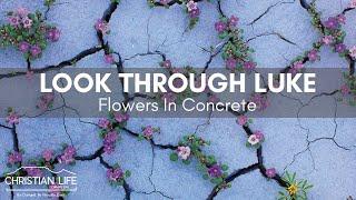 Look Through Luke (Flowers In Concrete)