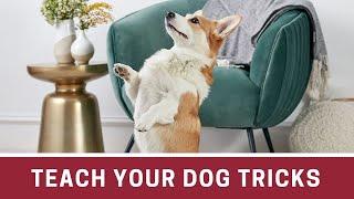 How to Teach Your Dog Tricks | How to teach your dog tricks easy | How to teach your dog new tricks