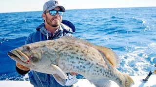 Gag Groupers, Red Snappers and Triggers in the Gulf