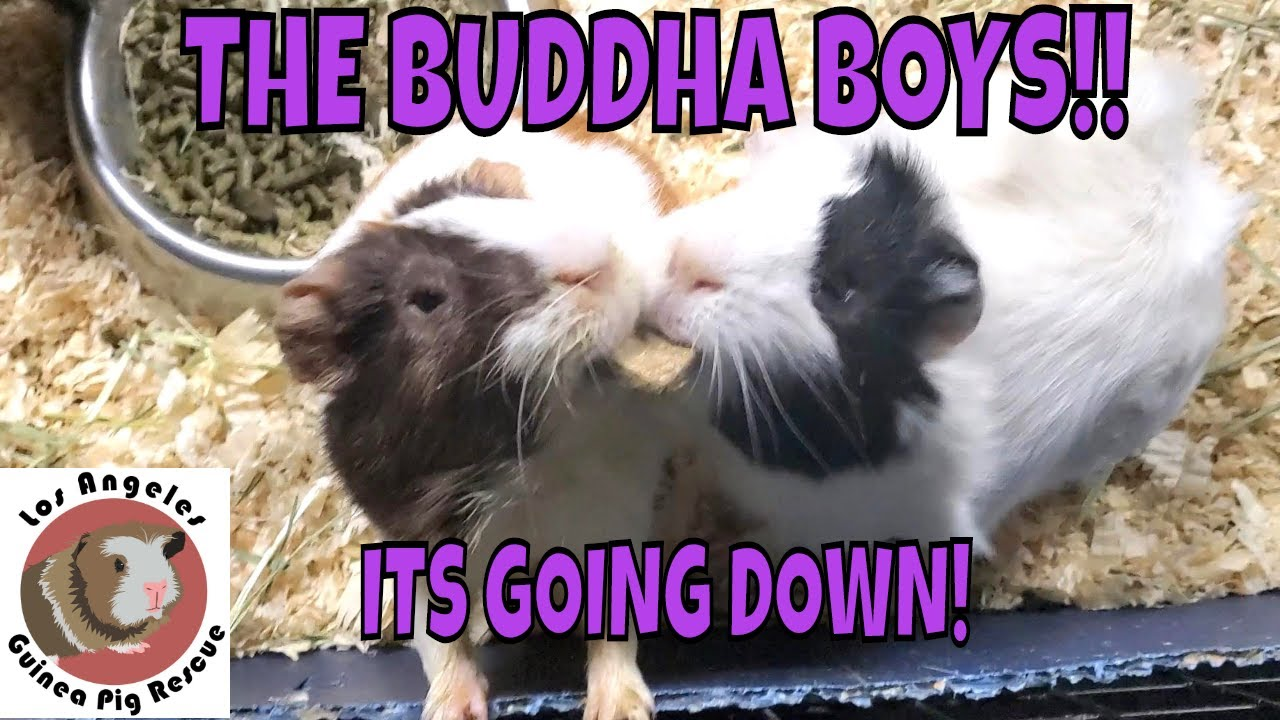 The Buddha Boys!  It's Going Down!!
