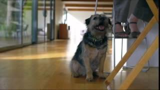 Как ухаживать за пожилой собакой -- советы Purina