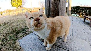 公園から帰ろうとすると、哀愁漂う茶シロ猫が引き止めてきた