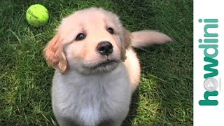 How to pick a healthy puppy - Tips to choosing a healthy dog