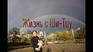 С мамой о: жизни с собакой ожидание/реальность ШИ-ТЦУ