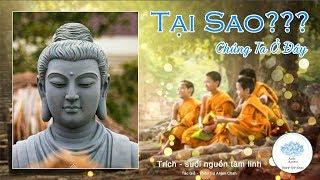 Rốt cuộc cả đời người là sống vì điều gì? - nghe lời Phật dạy hoát nhiên đại ngộ - Thanh Tịnh Đạo