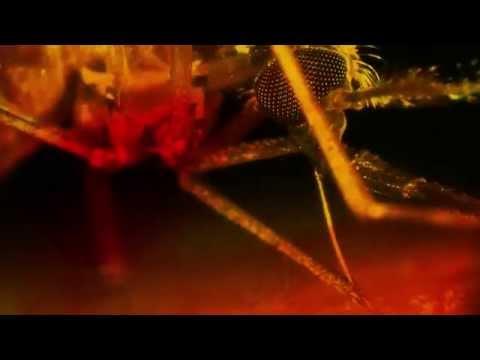 Bill Gates on world's deadliest animal - Mosquito