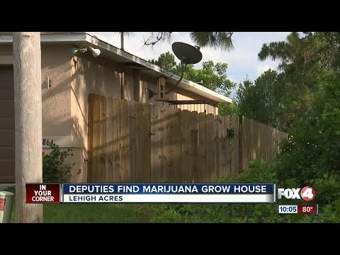 loud buzzing sound leads deputy to a marijuana grow house