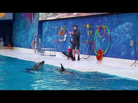 Part 3   Dubai Dolphinarium – Dolphin and Seal Show