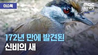 [이슈톡] 172년 만에 발견된 신비의 새 (2021.03.01/뉴스투데이/MBC)
