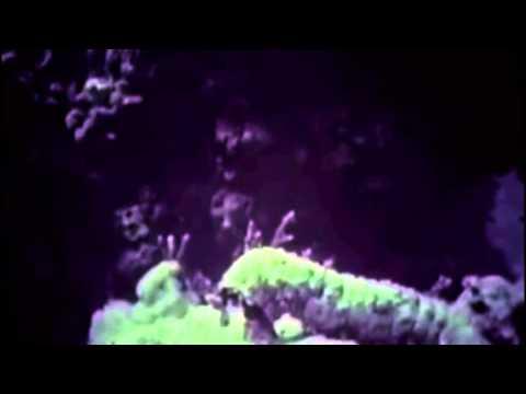 Strange Kids - Void of Space   [  MV ]