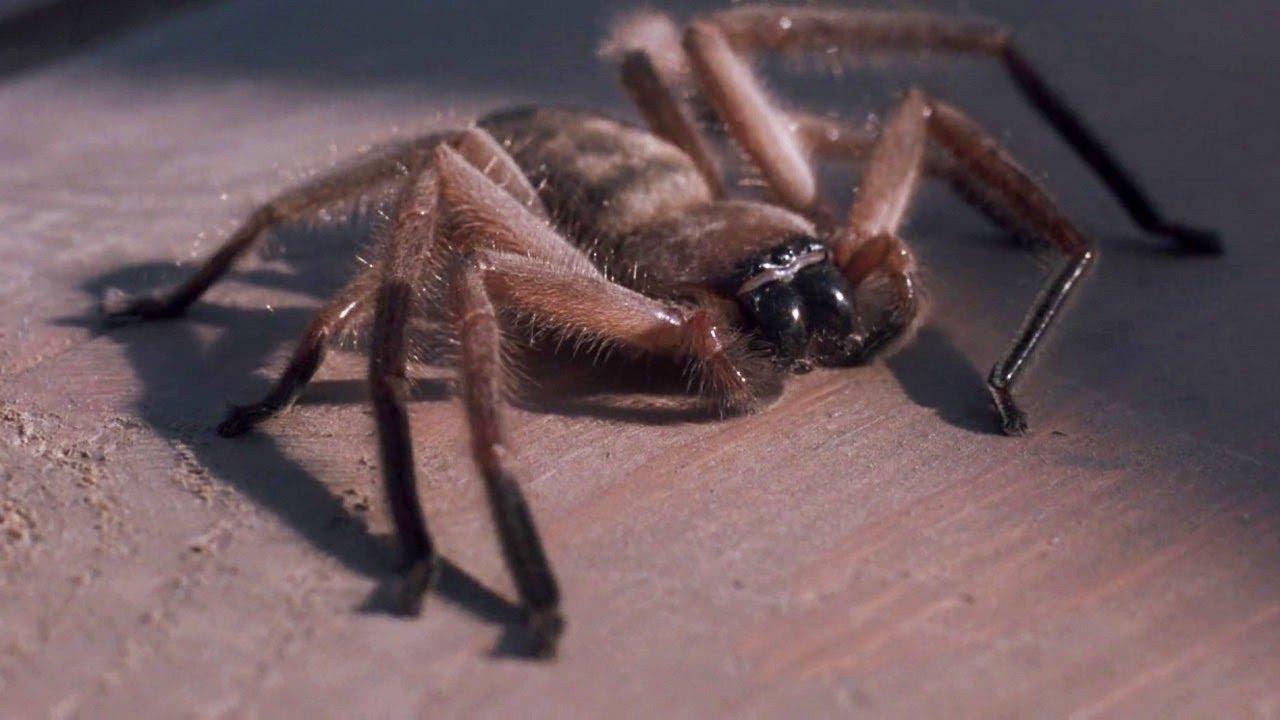вопрос паук ест людей картинки размера плюс