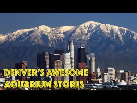Sweet Tour of Denver Aquarium Shops
