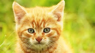 Милые котята играют и познают мир, cute kittens