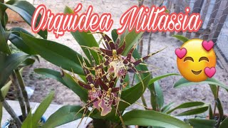 HOJE DE MANHÃ DENTRO DO MEU ORQUÍDARIO Veja que linda a floração dessa orquídea EXÓTICA