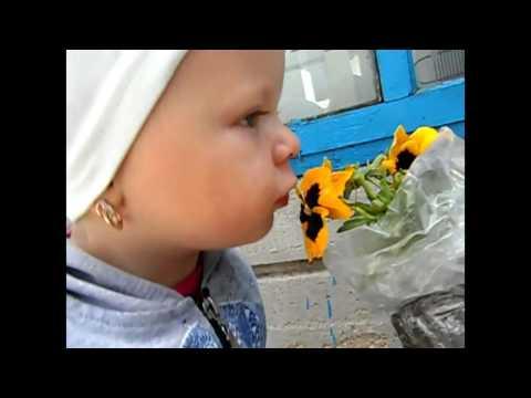 Анютины глазки (Виола) - описание, размножение, уход