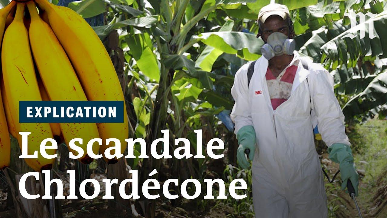 Pollution au chlordécone : Les Antillais·es en sont malades !