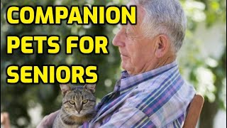 Are Cats Good Pets For Seniors?
