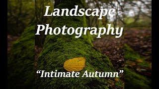 Intimate Autumn - Landscape Photography