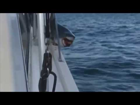 Shark jumps on boat near Long Island