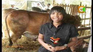 Advantages of Dairy Farming