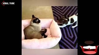 Graciosos de Gatos Chistosos, Смешные кошки, FUNNY CATS