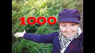 Рассказываю О СЕБЕ. 1000 подписчиков на канале Мокрый нос