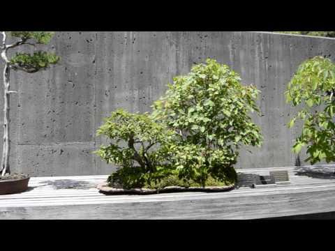 Bonsai Exhibition Gardens @ NC Arboretum  July 2016