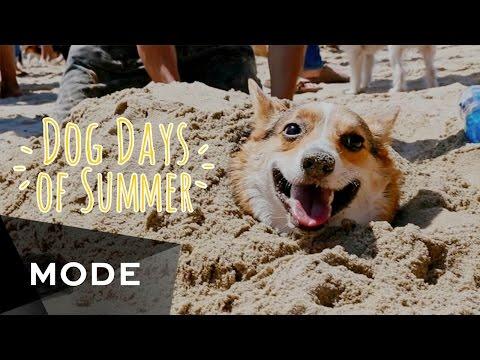 Corgi Dog Days of Summer  |  Glam.com