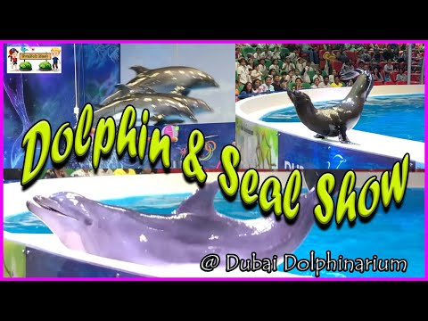 Dolphin & Seal show | Amazing Dolphin and Seal Show || Dubai Dolphinarium