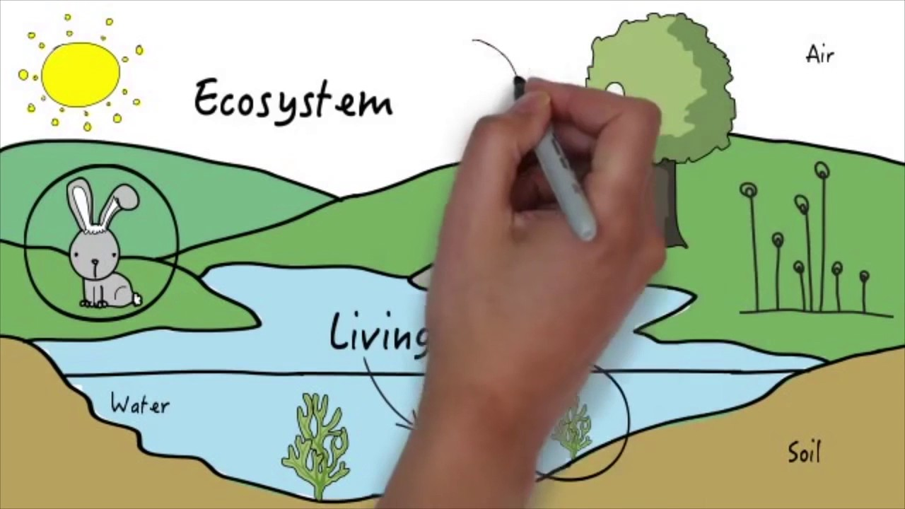 Parts of an Ecosystem - YouTube