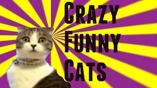 Crazy Funny Cats Vol. 1