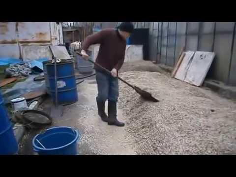выращивание грибов на опилках стружку
